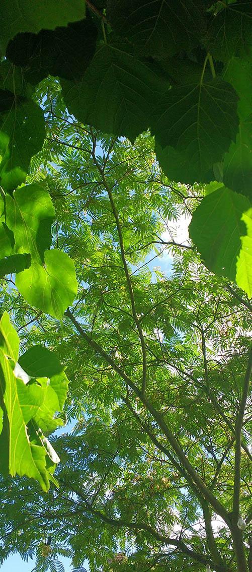Welkom bij mijn kleine domein - tuinontwerp, tuinadvies, beplantingsplan, tuinaanleg
