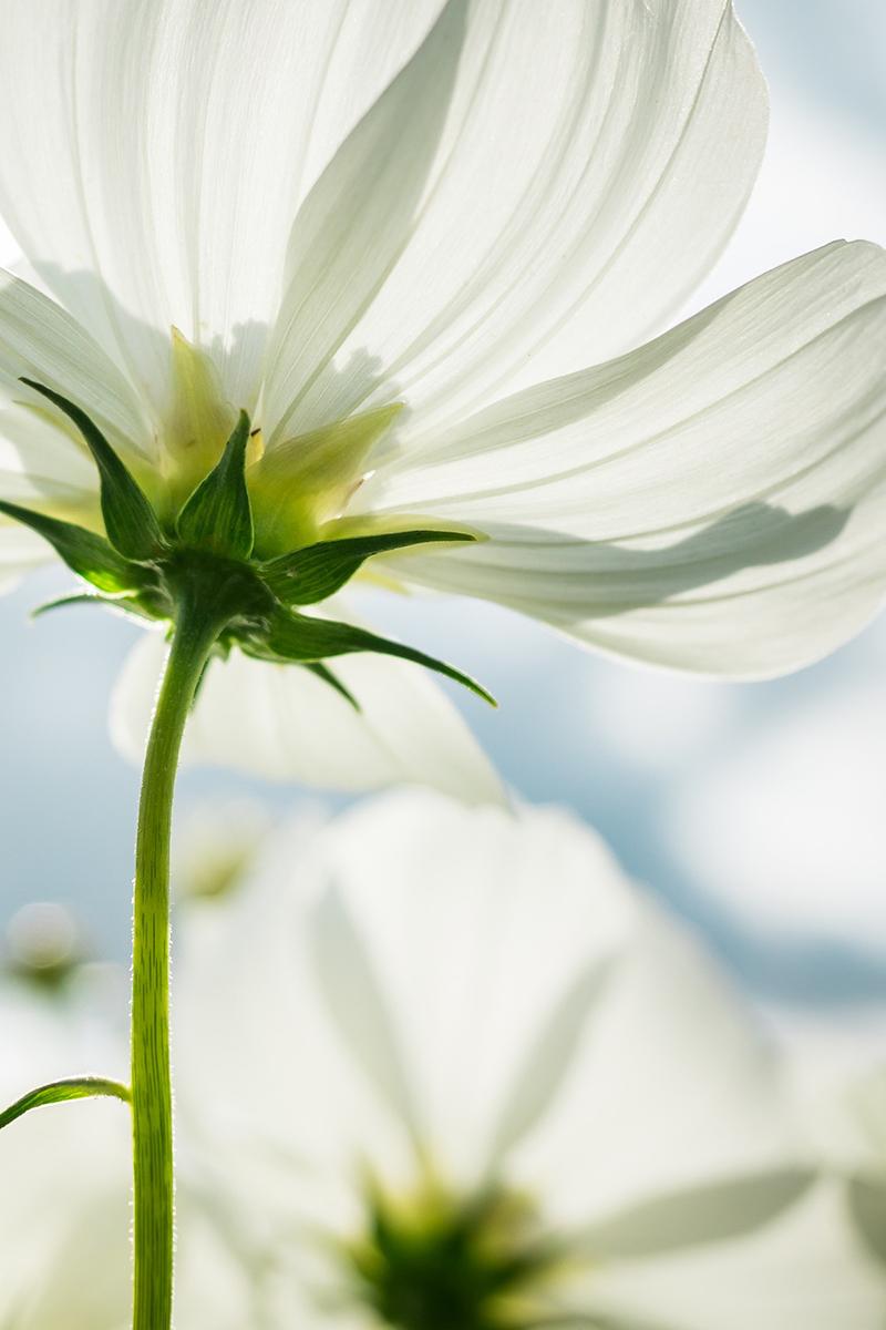 Petra Peskens, de creatieve tuinontwerper